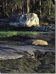 Rockweed, Ledge, Low Marsh, Boulder, Shoreline Trees