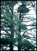 Subdivision Nest