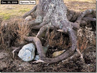 tree_12-20-2006_blog
