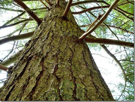 P1010911 96-Trees-2