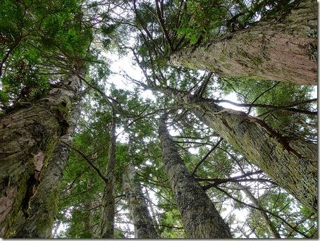 P1010969 96-Trees-11