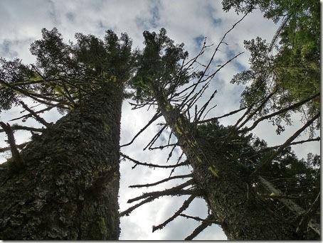 P1010972 96-Trees-9