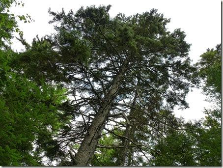 P1010978 96-Trees-5