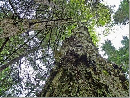 P1020160 96-trees-7
