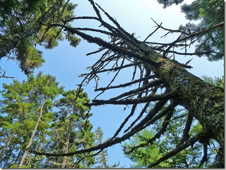 P1020168 96-tree-8