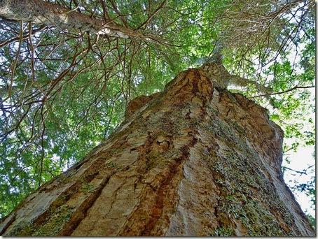 P1020224 96-Trees-3
