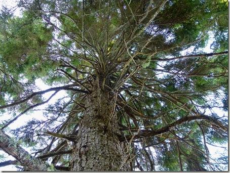 P1020237 96-Trees-4