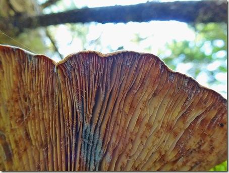 P1020670 96-fungi-2