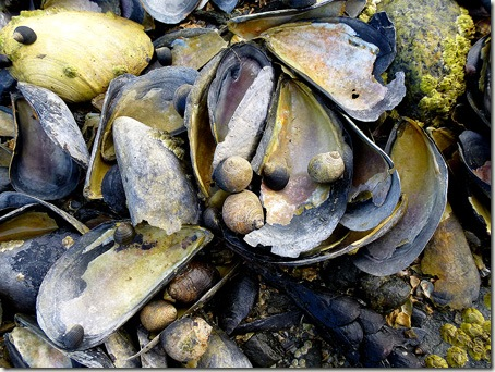 P1020767 96-mussels