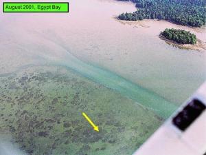Eelgrass Dieback Disease, 2001